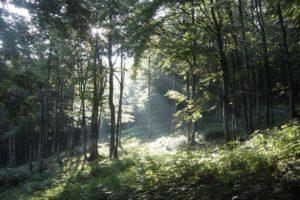 Šuma- PRR