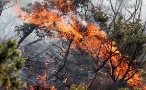 Uskoro 20 milijuna eura iz mjere 5 Programa ruralnog razvoja RH za požarom uništena poljoprivredna gospodarstva