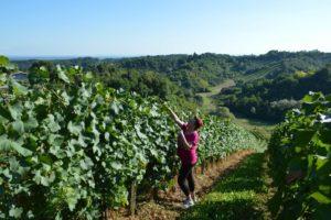 PRR 2014-2020, podmjera 6.3.,vinarstvo, vinograd
