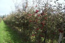 voćnjak-ruralni razvoj-m06